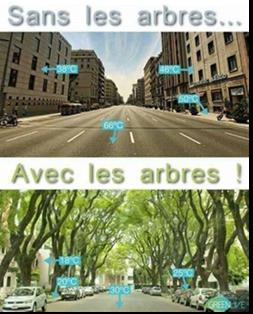 avec et sans arbres